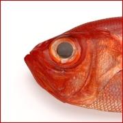金目鯛(キンメダイ)